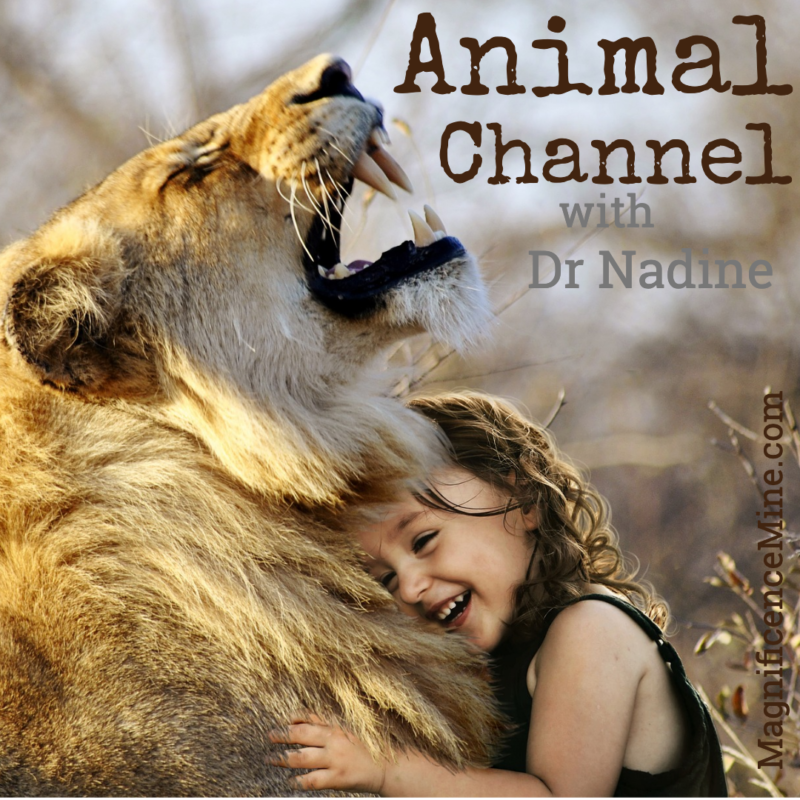 Animal Channel image